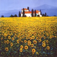 thoms-steve-sunflowers-field
