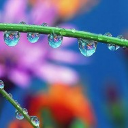 flowers_in_dew_Wallpaper__yvt2