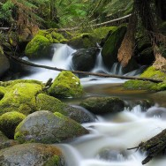 Nature-Wallpapers-2014-1