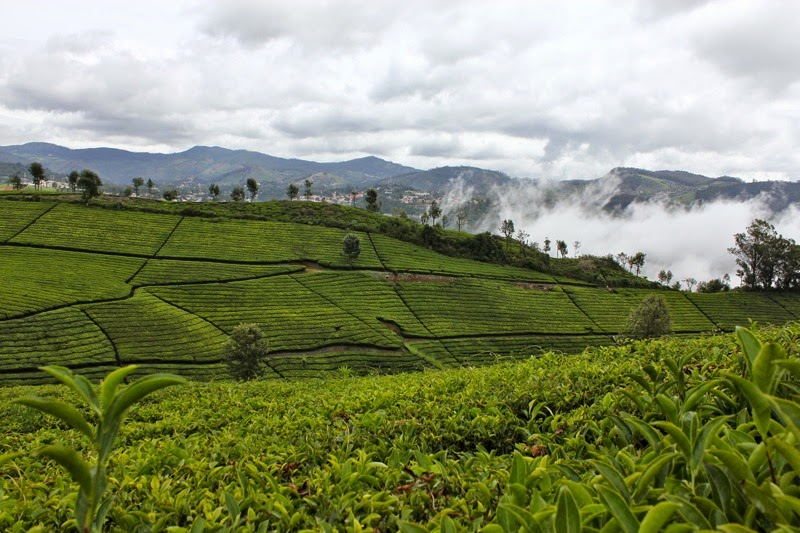 Coonoor Unlimited